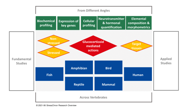 Research overview - Image 1