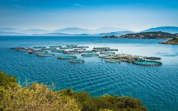 AQUACULTURE, FISHERIES, HUSBANDRY - Image 2